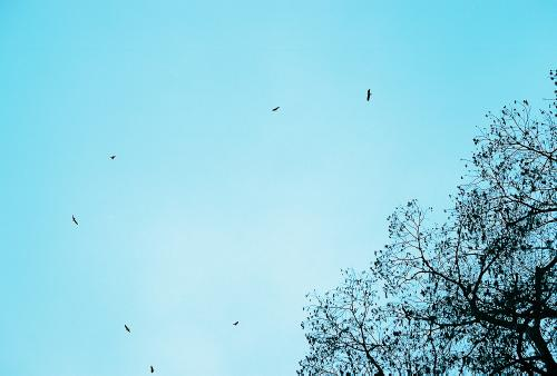 The vultures, circling overhead....