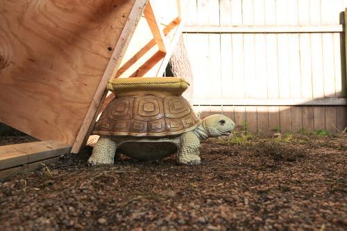 Mr. Turtle held things down.