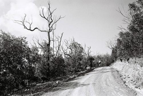 The Black Saturday bush fires enveloped this road, killing everything it swept over.