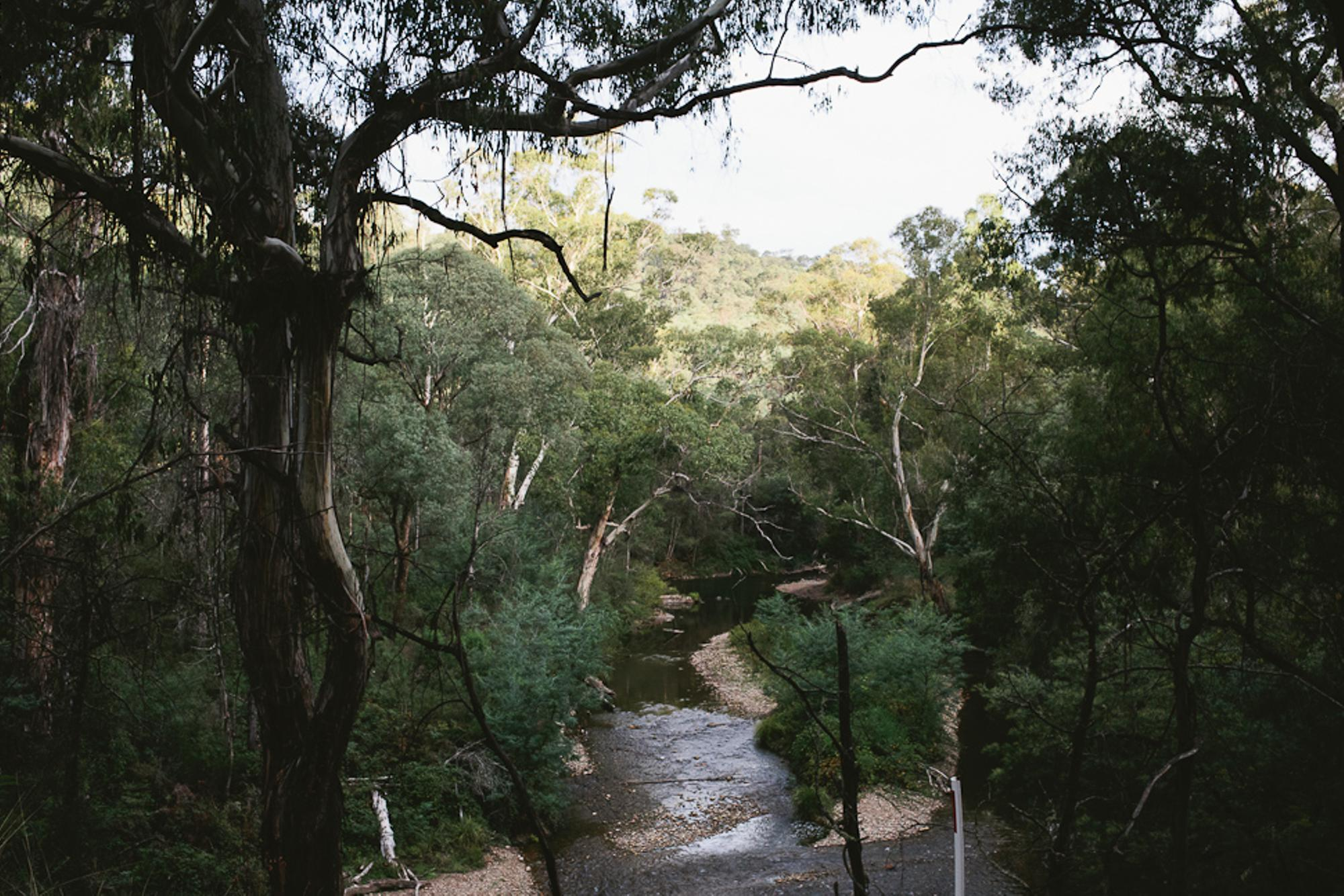 On this river, we saw a flock of Black Cockatoos, my Australian spirit animal. The omens of a solid day.
