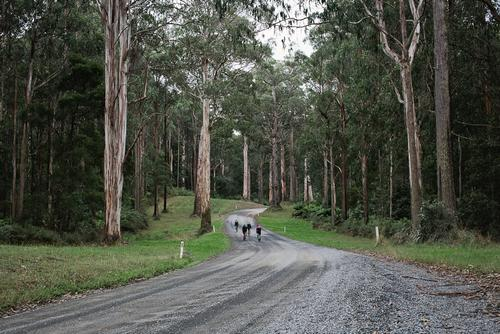 These roads just kept undulating through the gum trees.