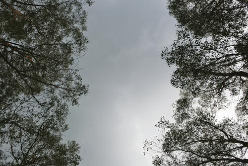 The trail profile, reflected in the gum trees.