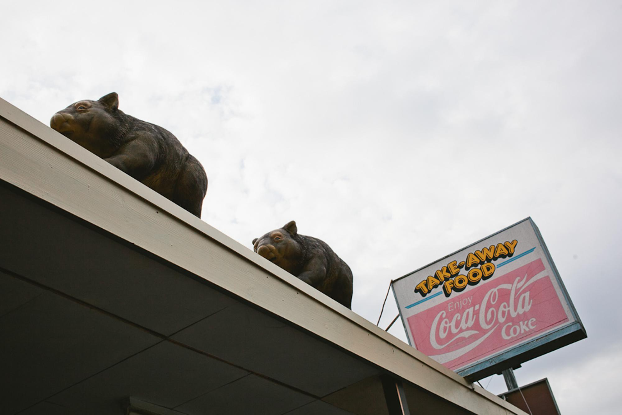 Mr. and Mrs. Wombat