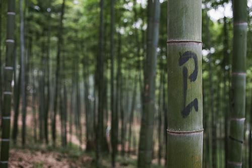 ... and it's nestled in the side of the mountain, where bamboo plants have their owner's names painted on them.