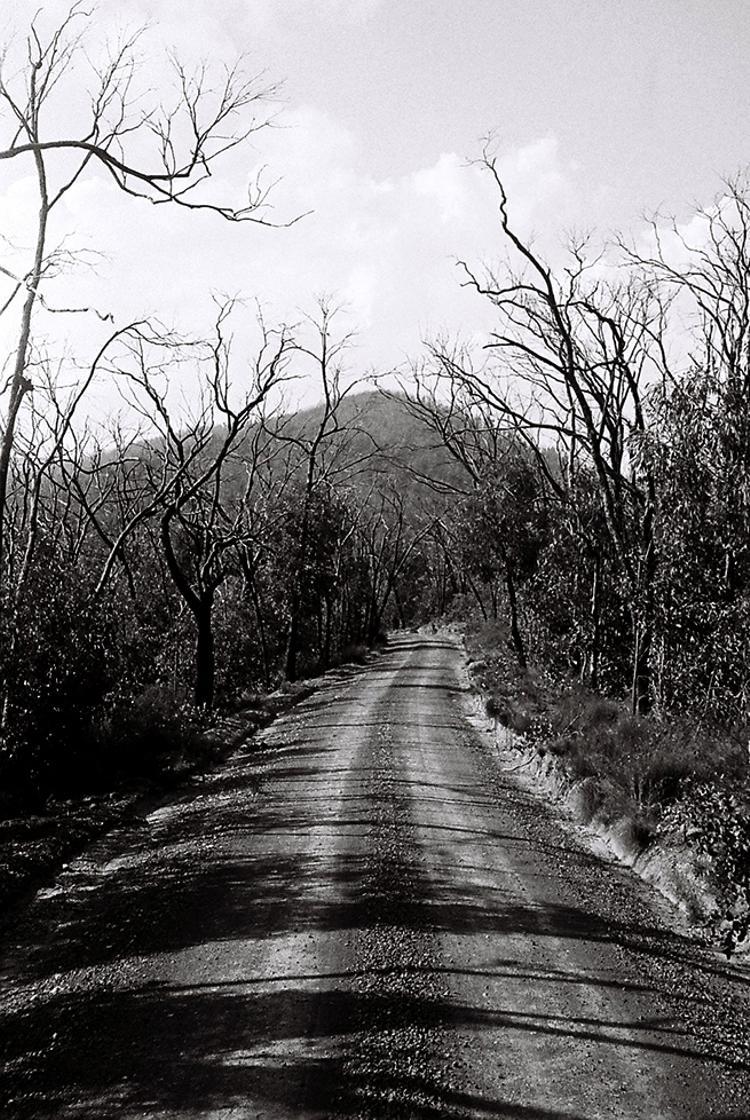 Obligatory Vacant Road