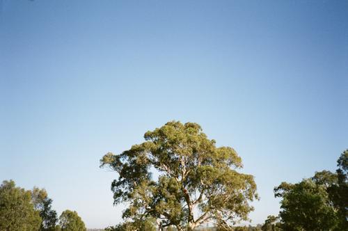 Blue skies, big trees.