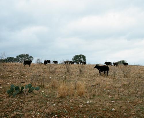 Livestock ran loose.