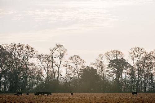 Pastures.