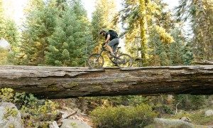 ACRE_Sequoia_MTB-102