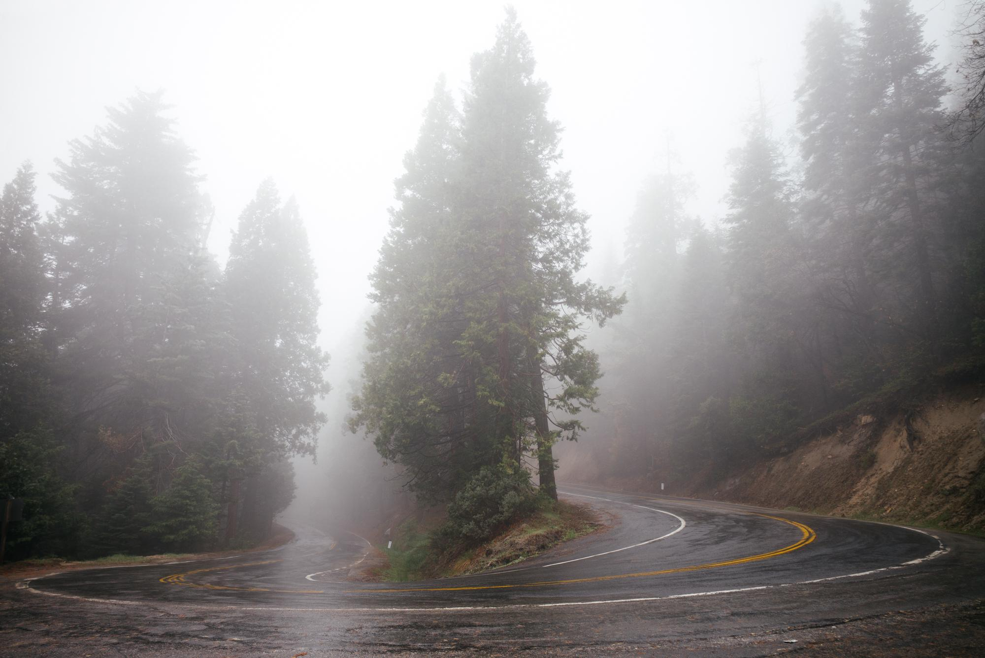 Sequoias, hugged by the road.