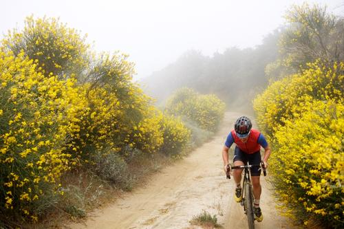 Climbing up amidst the yellow.