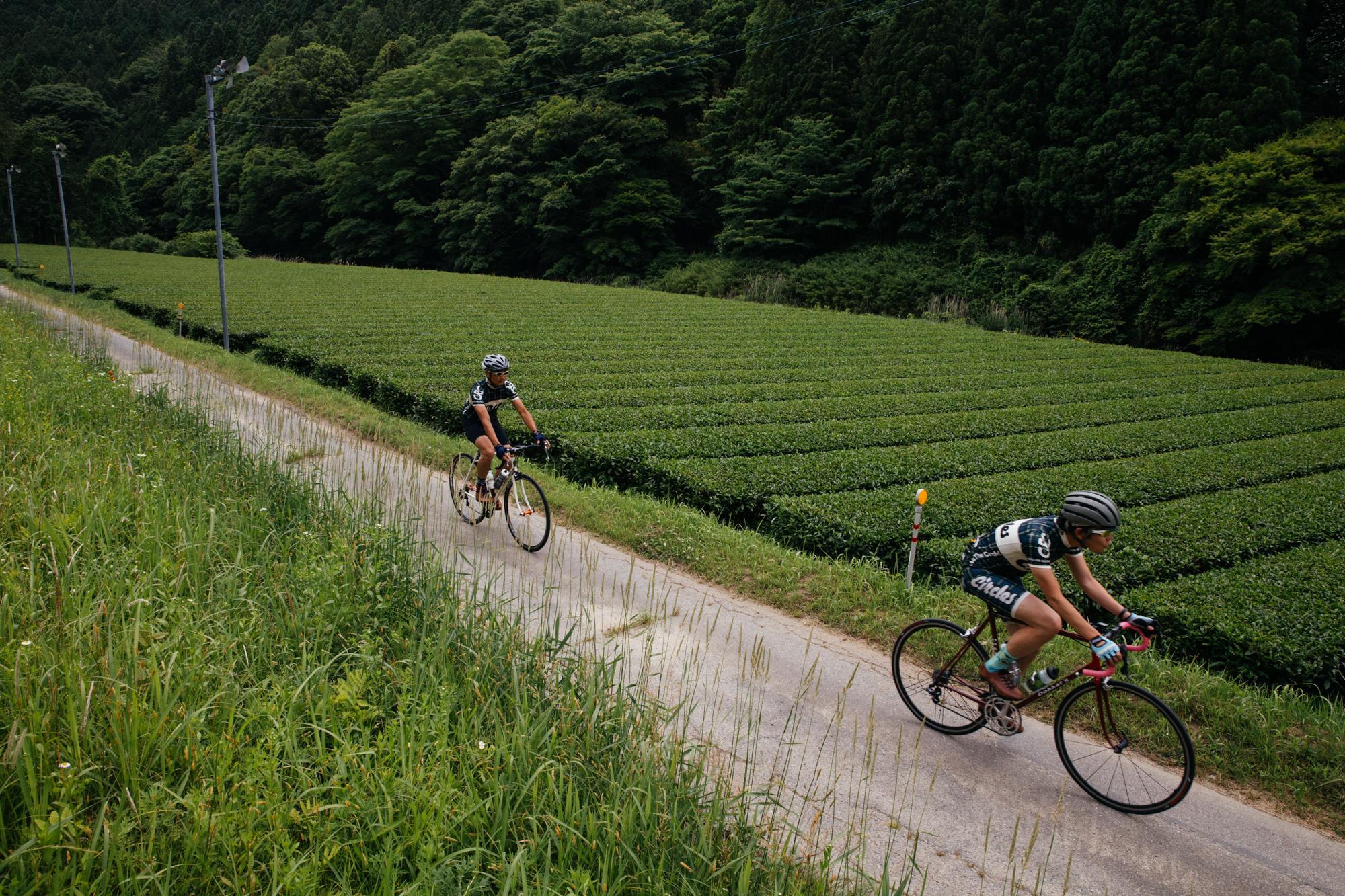 Riding through the tea fields