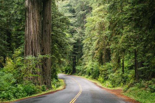 Redwood Roads