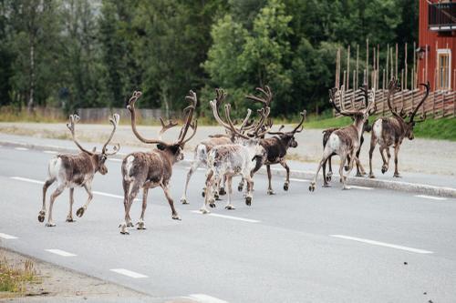 Reindeer Santa Camp