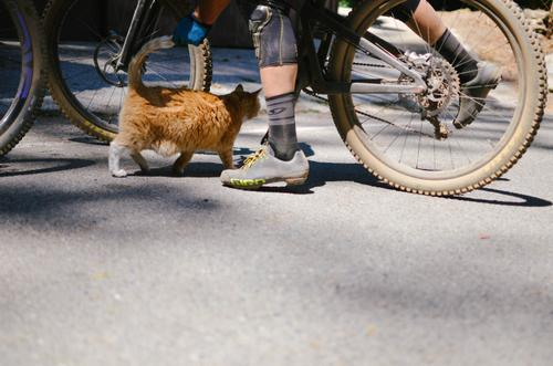 Let's ride right meow!
