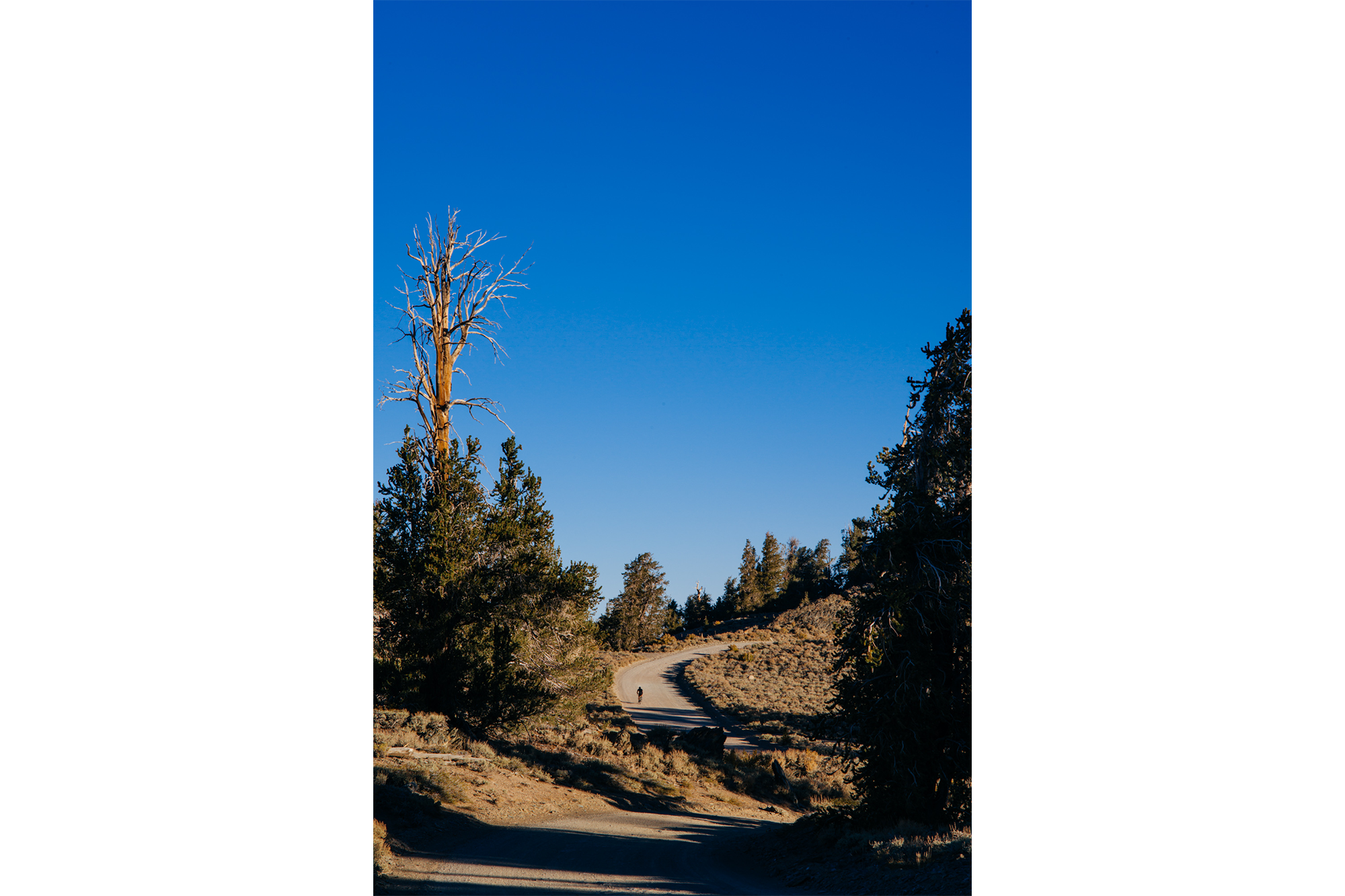 Riding Up White Mountain in the Inyo National Forest-24