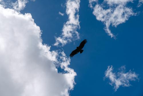 A curious Condor