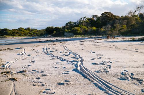 Beach lines.