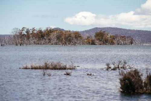 Lakes lined with dead trees, we saw a Platypus.