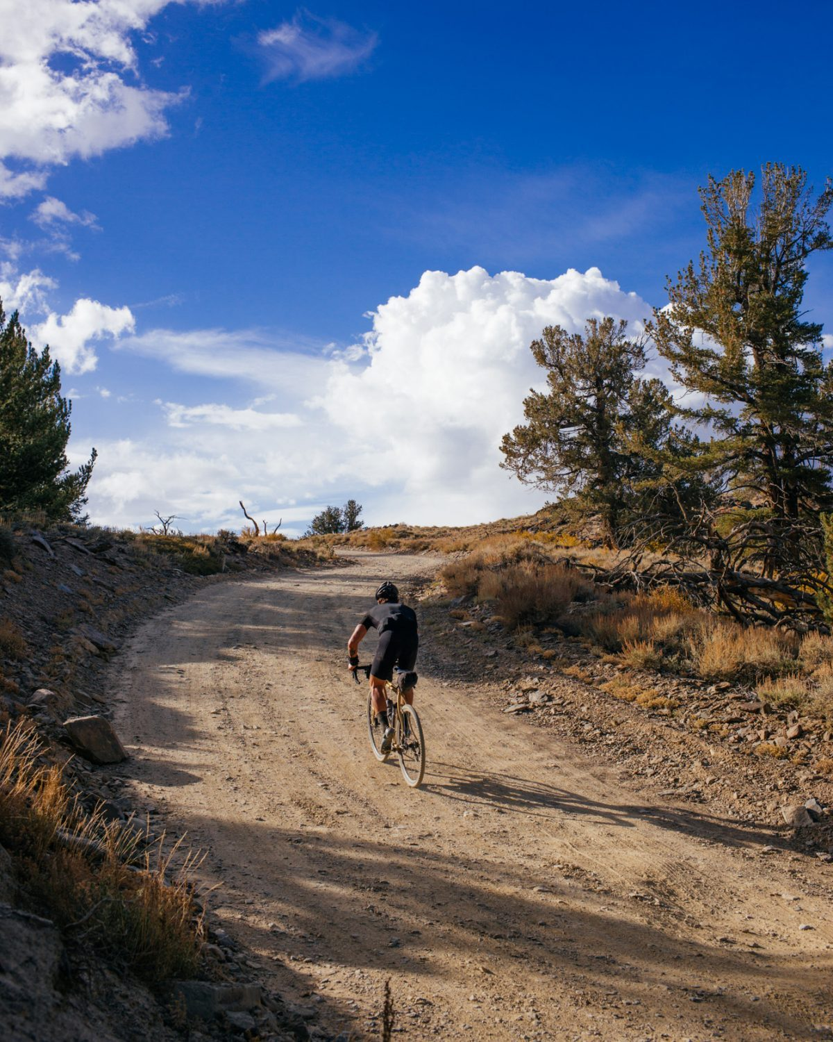 Riding Up White Mountain in the Inyo National Forest-92