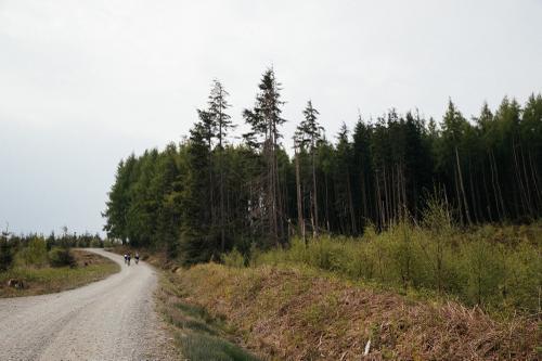 Logging roads.