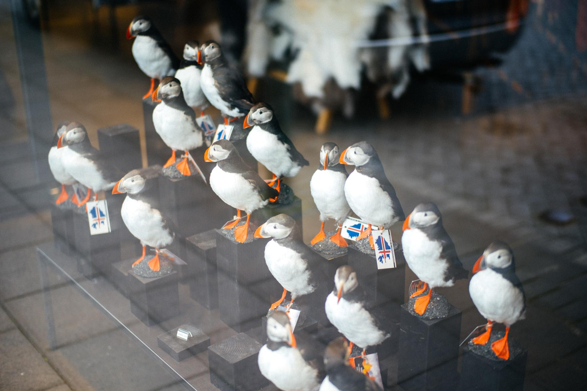 Taxidermy Puffins? WTF?