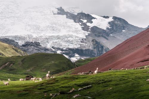 Glacier life