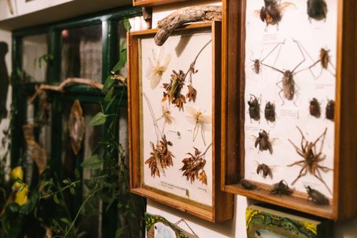 'Insectos Tipicos De Sud Yungas'