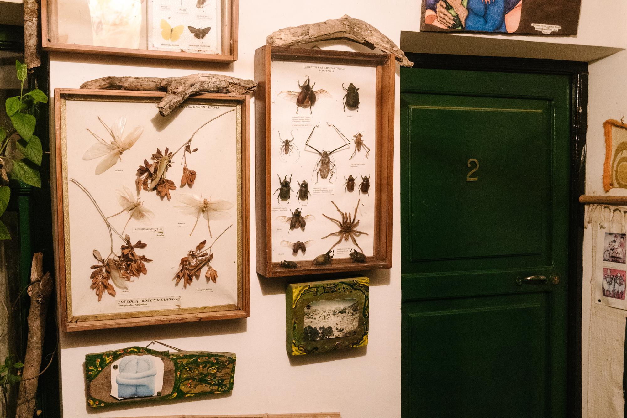 Door for spider scale