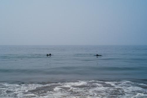 Porpoise on a glassy ocean.