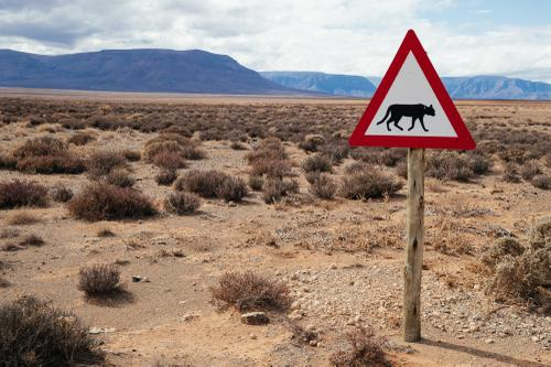 Leopard crossing - seriously!