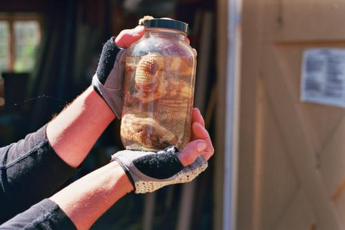 Gila Monster in a jar...cool