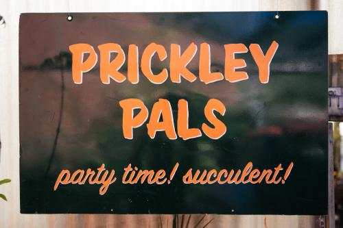 Prickley Pals plant shop.