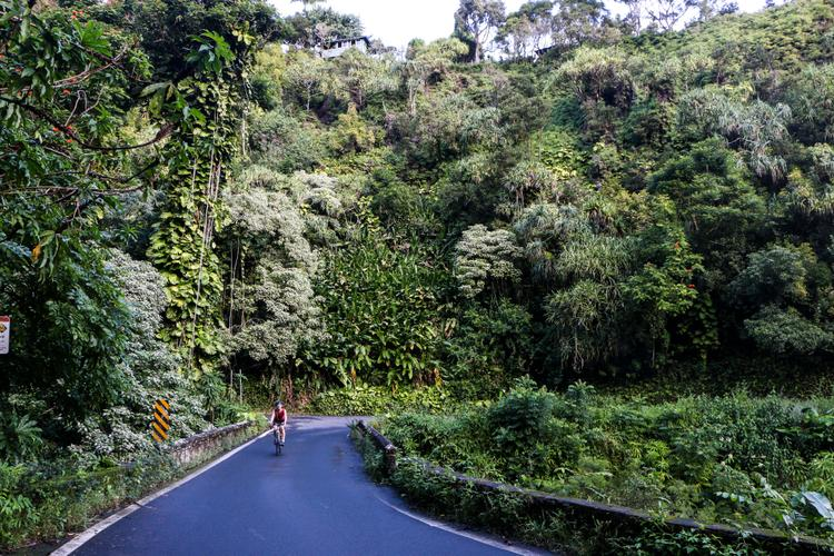 Riding in a Forest of House Plants on Maui's Road to Hāna – Morgan Taylor