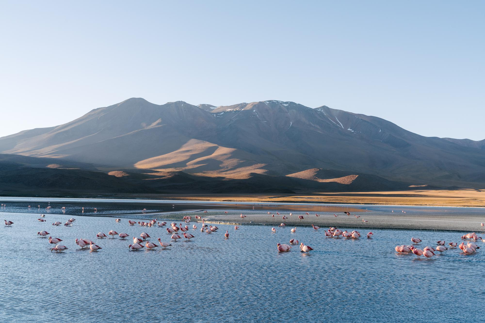 ...with flamingo-filled lagunas at every turn...