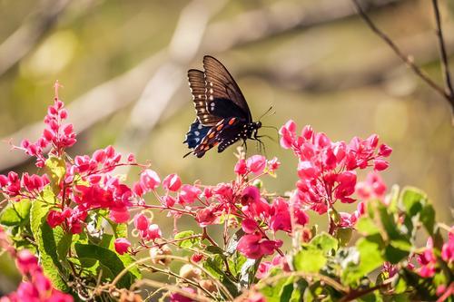 Abundant wildlife and flowers were everywhere