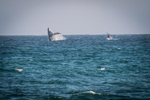 Didn't get many great photos but there were whales breaching literally everywhere there was an ocean.