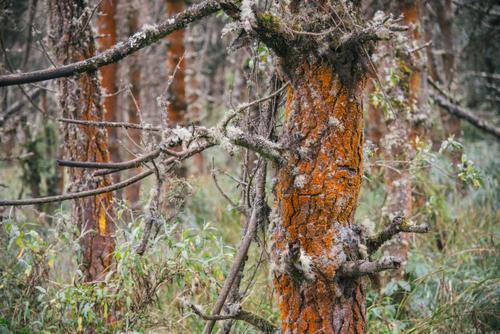 amazing orange lichen