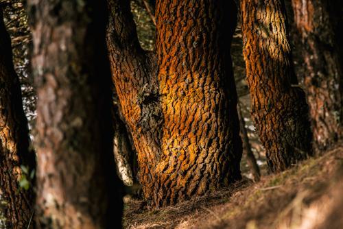 golden light on orange lichen