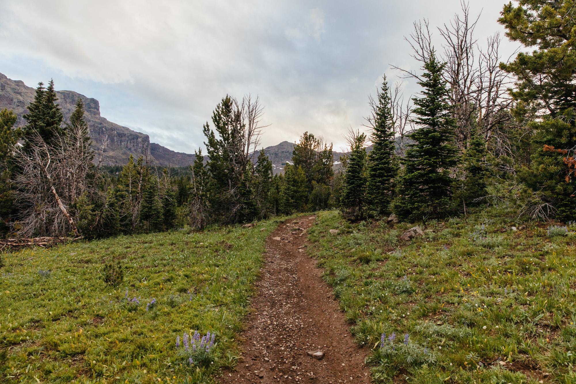 Montana One Track