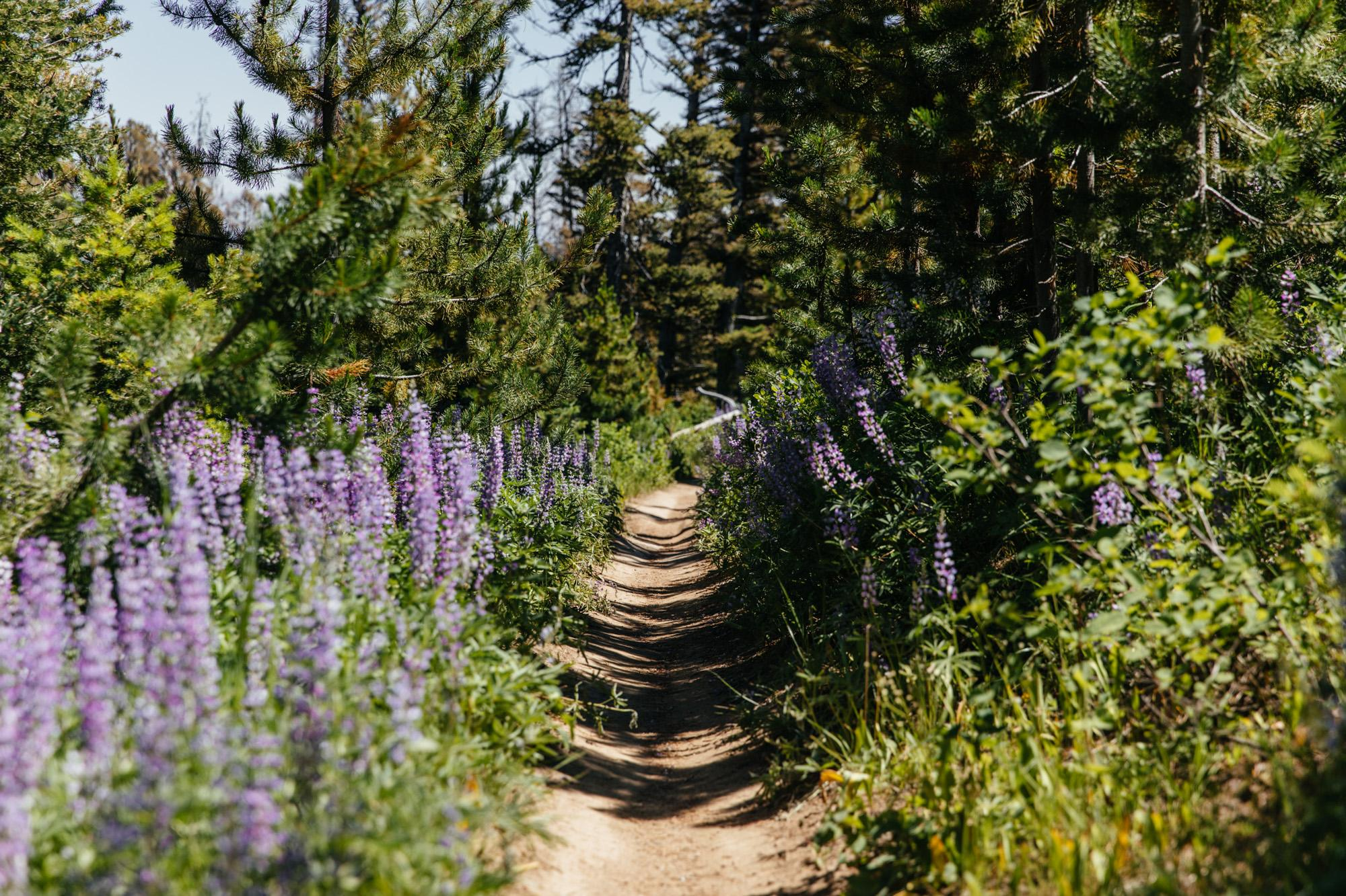 Flowers of Montana