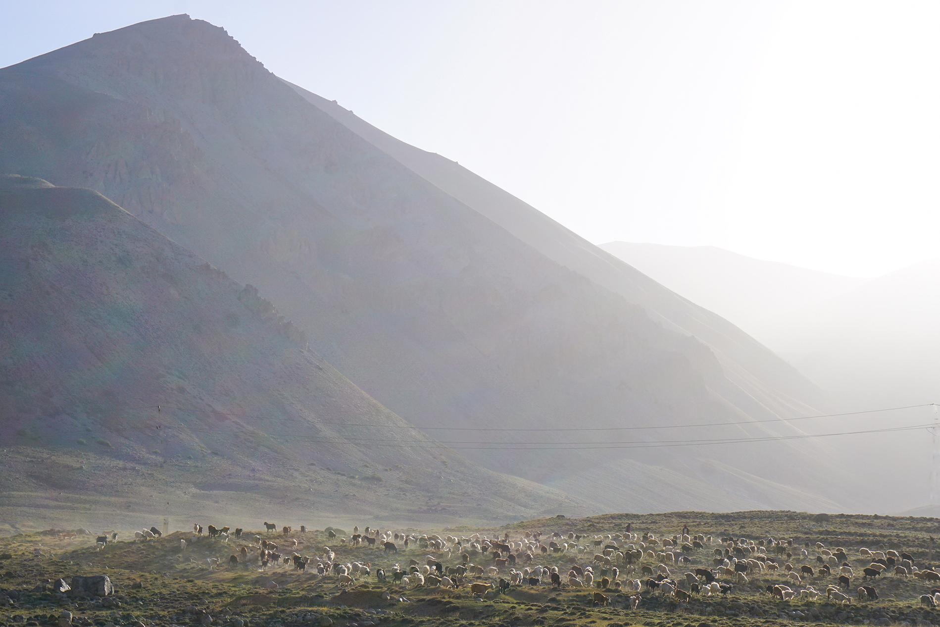 Morning light on shepherds and their goats.