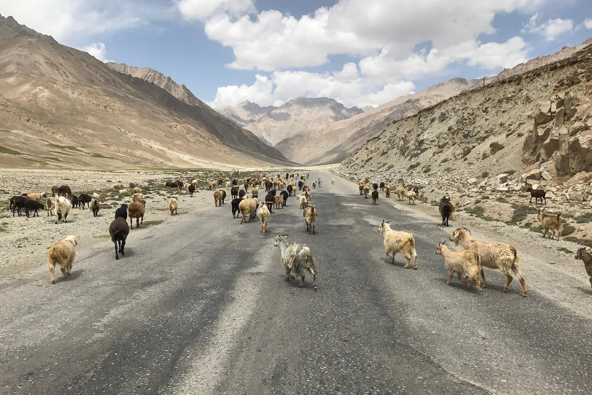 We saw more goats than cars on the Pamir Highway.