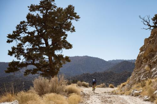 Leave it on the Road's Desert Bear: a Ride from Joshua Tree to LA
