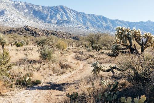 50 Year Trails