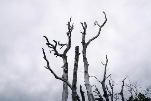 Nature is metal