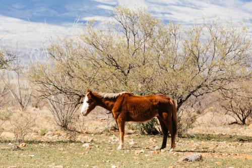 Skinny wild horse.