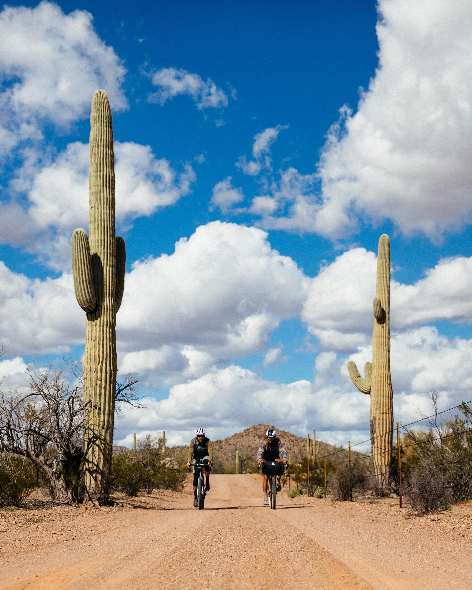 SaguaroLoop-11-2