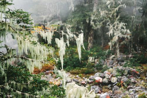 Treetails