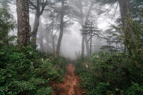 Forest 1-track